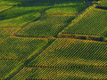 Vineyards in italy the chianti region of tuscany Stock Photo