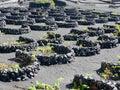 The vineyards of la gería lanzarote canary islands a sub zone denominación de origen wine region with their traditional methods Royalty Free Stock Images