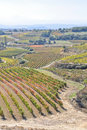 Vineyards at La Rioja, Spain Royalty Free Stock Photos