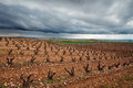 Vineyards in la rioja spain with cloudy sky Stock Photography