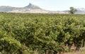 Vineyards in La Rioja Royalty Free Stock Photo