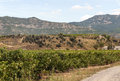Vineyards in la rioja the spanish province of on a sunny day Royalty Free Stock Images