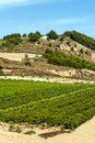 Vineyards in la rioja the spanish province of on a sunny day it s a vertical picture Stock Photos