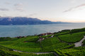 Vineyards in Lavaux Royalty Free Stock Photos