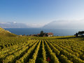 Vineyards in Lavaux, Switzerland Stock Image