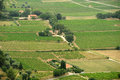 The vineyards of Le Castellet Royalty Free Stock Photo