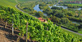 Vineyards,Main River,Germany Stock Image