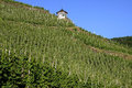 Vineyards on the Moselle and half-timbered shelter Royalty Free Stock Photo