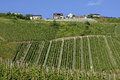 Vineyards on the Moselle wine village, Germany Royalty Free Stock Photo