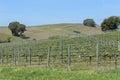 Vineyards in napa valley california grape Stock Photos