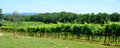 Vineyards Of North Georgia USA