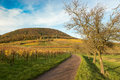 Vineyards in pfalz at autumn time germany Royalty Free Stock Photography