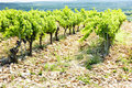Vineyards, Provence, France Royalty Free Stock Photo