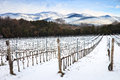 Vineyards rows covered by snow in winter. Chianti, Florence, Ita Royalty Free Stock Images