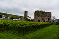 Vineyards of Rudesheim Royalty Free Stock Photo