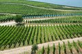 Vineyards in Rudesheim am Rhein Royalty Free Stock Photo