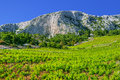 Vineyards, southern coast of Hvar island Royalty Free Stock Photo