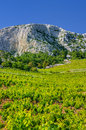 Vineyards, southern coast of Hvar island Royalty Free Stock Photos
