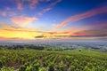 Vineyards and sunrise, Beaujolais, Rhone, France Royalty Free Stock Photo