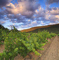 Vineyards at sunset in france Stock Image