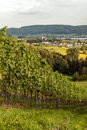 Vineyards in Swiss Royalty Free Stock Photo