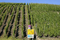 Vineyards and traffic signs on the Moselle, Germany Royalty Free Stock Photo