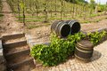 Vineyards in troja prague vineyard spring without grapes Royalty Free Stock Photography
