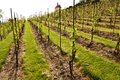 Vineyards in troja prague vineyard spring without grapes Stock Photography