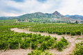 Vineyards in the valley of mountains background Royalty Free Stock Photo