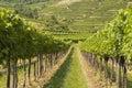 Vineyards of wachau area austria and hills Stock Photos