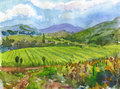 Vineyards. Watercolor. Stock Photography
