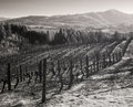 Vineyards, Willamette Valley in Infrared Stock Photo