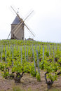 Vineyards with windmill Royalty Free Stock Photo
