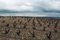 Vineyards in winter cloudy day. La Rioja Royalty Free Stock Images