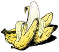 Vintage 1950s Bananas Stock Photo
