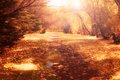 Vintage Autumn Path Royalty Free Stock Photography