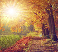 Vintage autumnal landscape in the sunset Royalty Free Stock Images