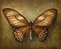 Vintage background with butterfly Stock Photo
