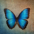 Vintage background with butterfly blue Stock Photography