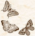 Vintage background old crumpled paper with flying butterflies in the corner many similarities to the author s profile Royalty Free Stock Image