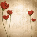 Vintage background with poppies Royalty Free Stock Photos