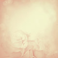 Vintage Background With Rose F...