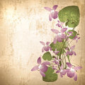 Vintage background with wild violet flowers Stock Image