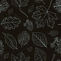 Vintage black background tree leaves hand drawn silhouettes seamless pattern vector illustration Royalty Free Stock Photo