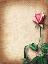 Vintage card for congratulations with pink roses Royalty Free Stock Photo