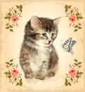 Vintage card with fluffy kitten and butterfly.  Imitation of wat Royalty Free Stock Photo