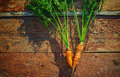 Vintage carrot Royalty Free Stock Photo