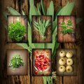 Vintage collage of fresh herbs on brown background Stock Image