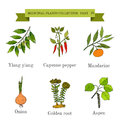 Vintage collection of hand drawn medical herbs and plants, ylang-yalng, cayenne pepper, mandarine, onion, golden root