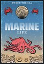 Vintage Colored Sea Life Poster